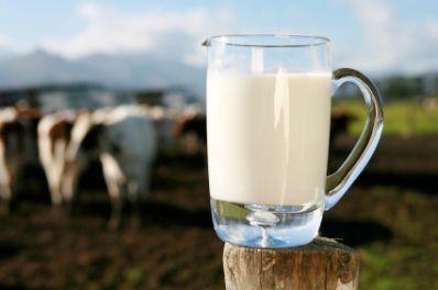 Imagini pentru lapte de vaca